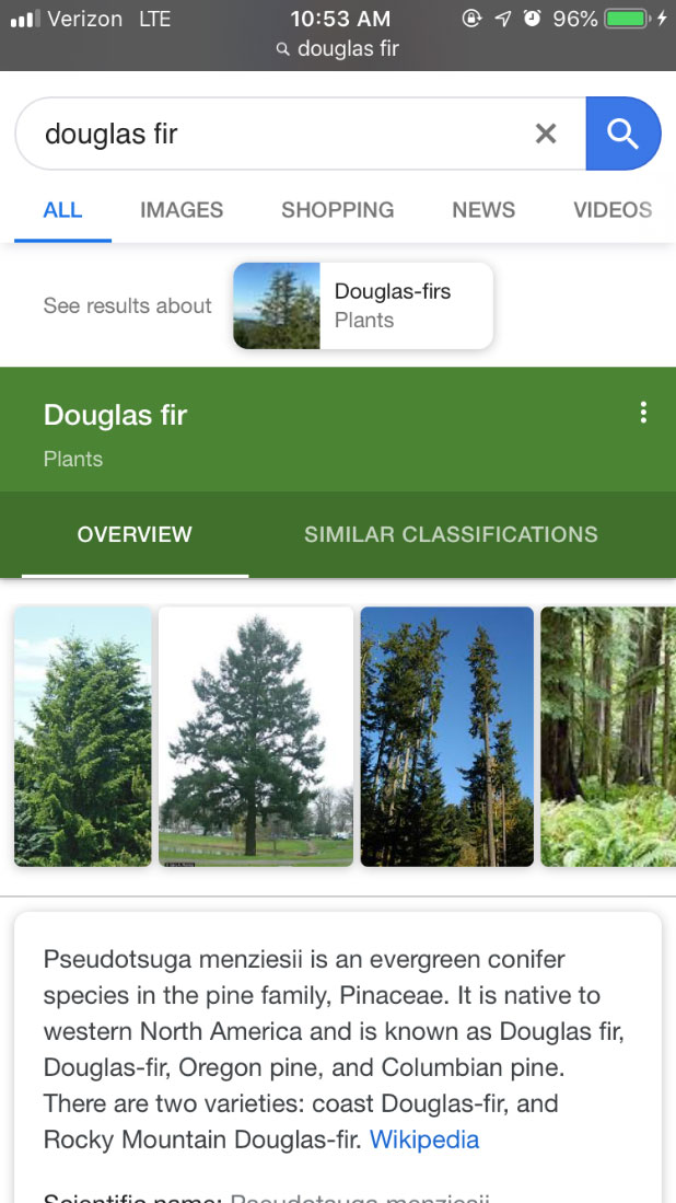 mobile device screen shot of google search for douglas fir
